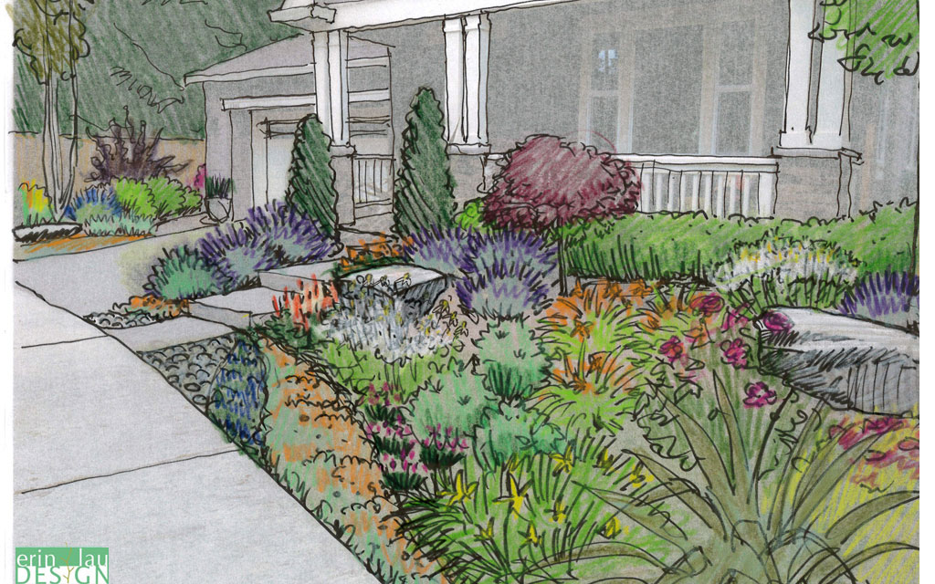 Front yard pollinator design sketch