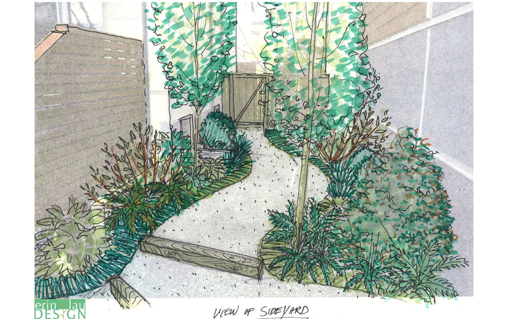 Shady side yard path sketch