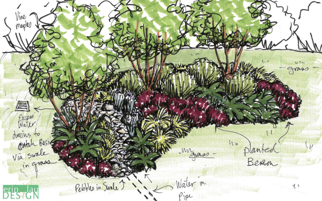 Seattle rain_garden_sketch