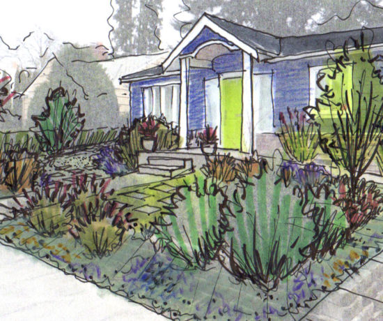How to draw plants drawntogarden for How to landscape a garden